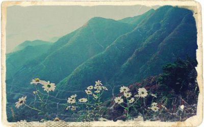 LEGENDA KAŽE… Kako je otkriven korejski ginseng