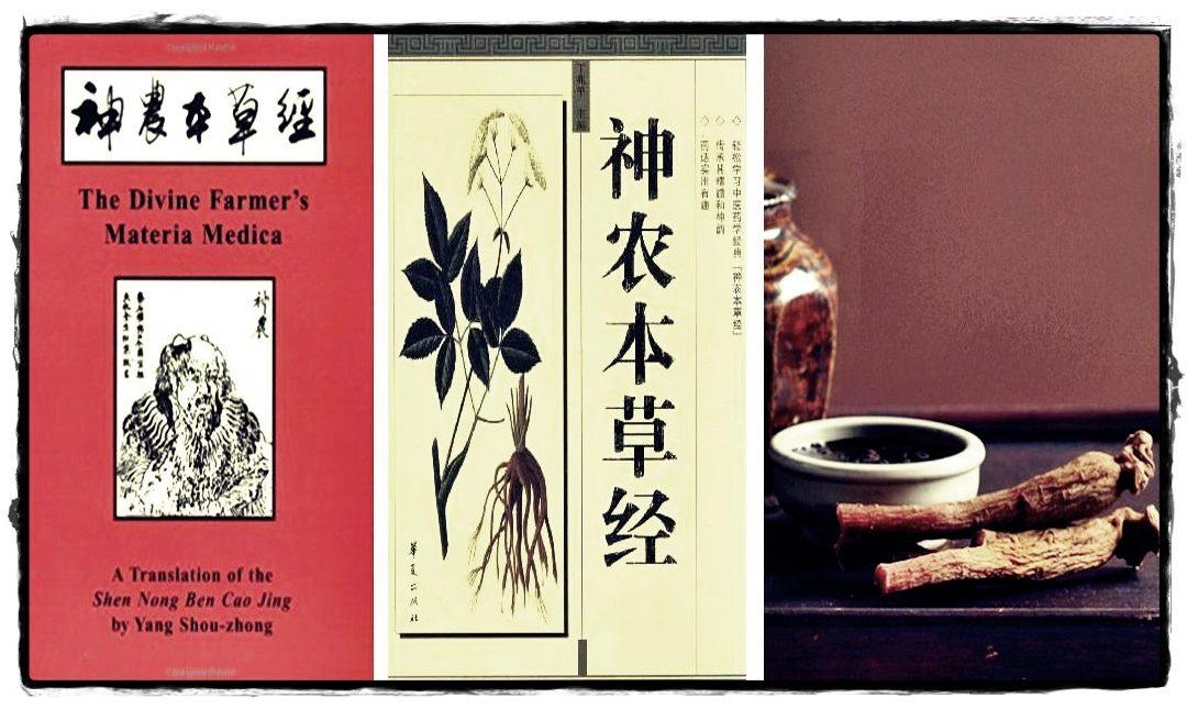 PLEMENITA BILJKA U zapisima usmenih predaja navodi se za što su sve stari Kinezi koristili ginseng