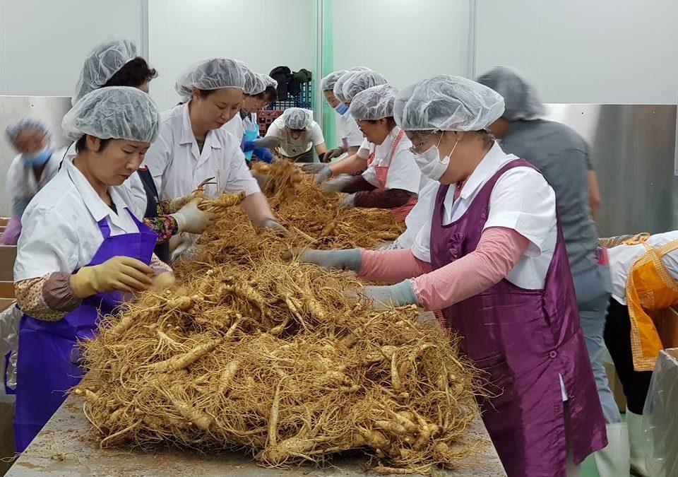 Foto: Samsidae Facebook, ekstrakt ginsenga, Eumsan ginseng, azijski ginseng, korejski ginseng, koreanski ginseng,